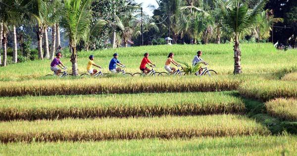 Hal Menarik Yang Dapat Di Lihat Saat Bali Bike Tours Rute Kintamani Ubud