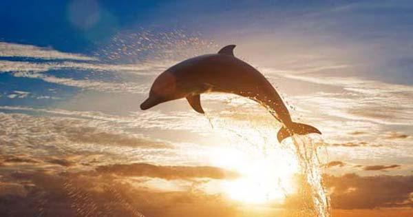 Menonton Lumba Lumba Di Tengah Laut Pantai Lovina