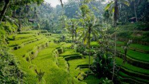 Sawah Terasering Tegalalang Daya Tarik Pariwisata Bali