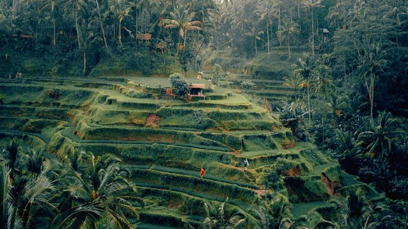 Kegiatan Liburan Menarik Di Tempat Wisata Ubud Bali