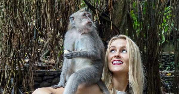 Melihat Monyet Di Monkey Forest