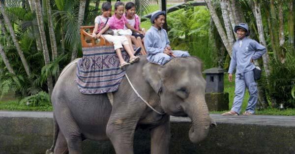 Aktivitas Naik Gajah Untuk Anak Di Bali