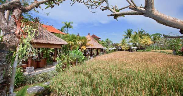 Lokasi Restoran Bebek Tepi Sawah Ubud