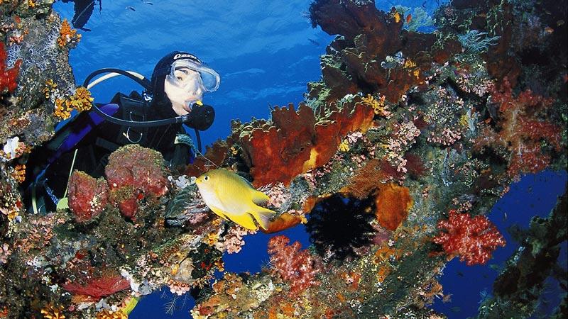 Harga Scuba Diving Di Kapal Karam USS Liberty