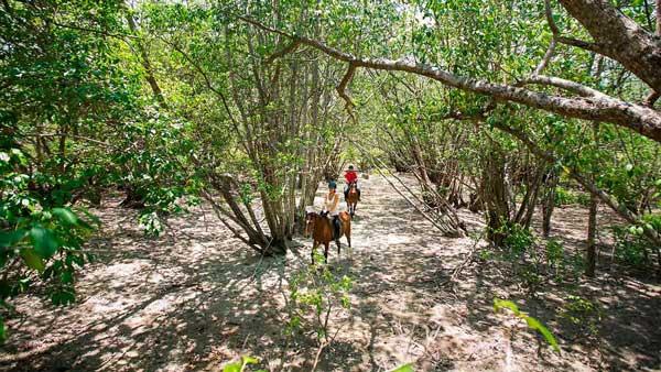 Menunggang Kuda The Menjangan Resort