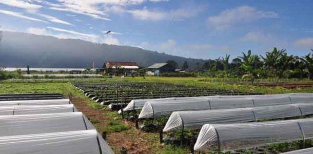Bali Strawberry Farm & Restaurant
