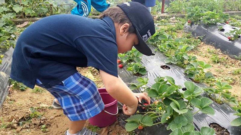 Kebun Strawberry Bedugul Bali