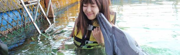 Bali dolphin lodge Serangan