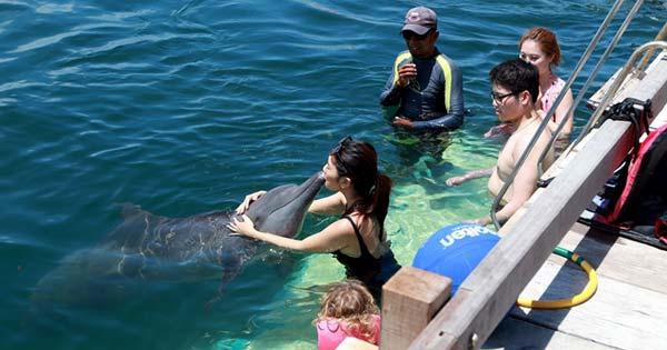 Lumba Lumba Bali Dolphin Lodge Serangan