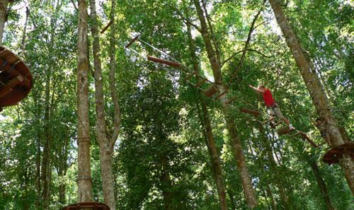 bali treetop 23