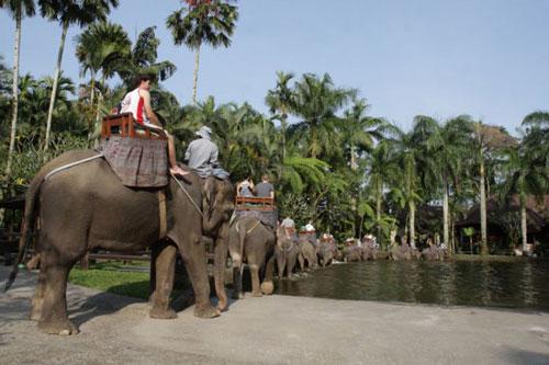 taro elephant safari park ubud