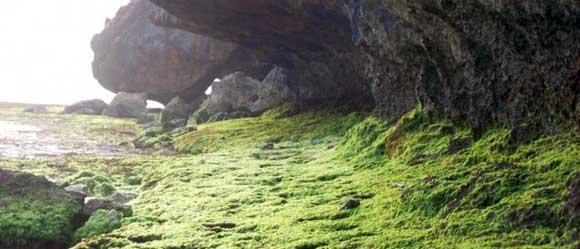 lumut hijau menyelimuti batu karang pantai nyang nyang uluwatu