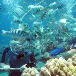 Labuhan Amuk Seawalker Bali