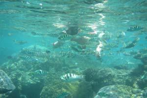 Snorkeling Labuhan Amuk Watersports