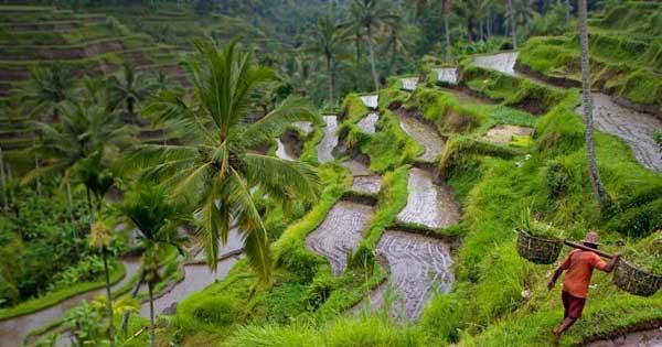 Lokasi Sungai Dekat Dengan Tempat Wisata Ubud