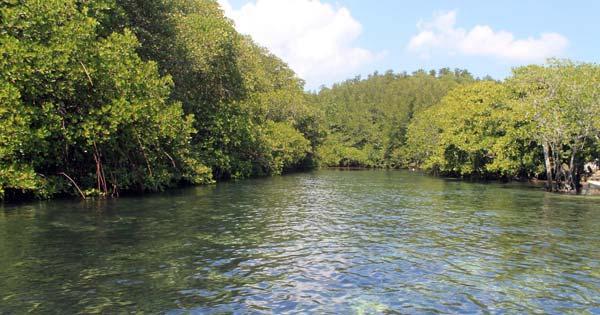 Hutan Bakau Tanjung Benoa