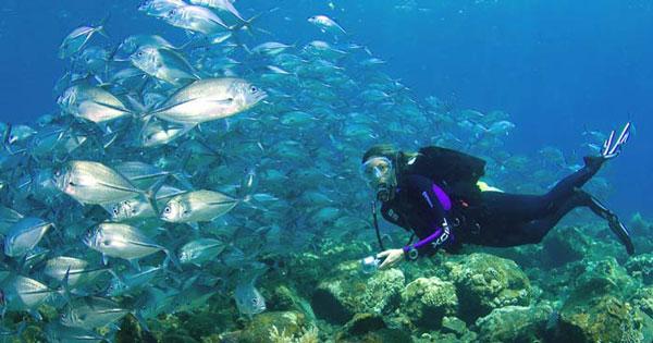 Aktivitas Scuba Diving Di Bali