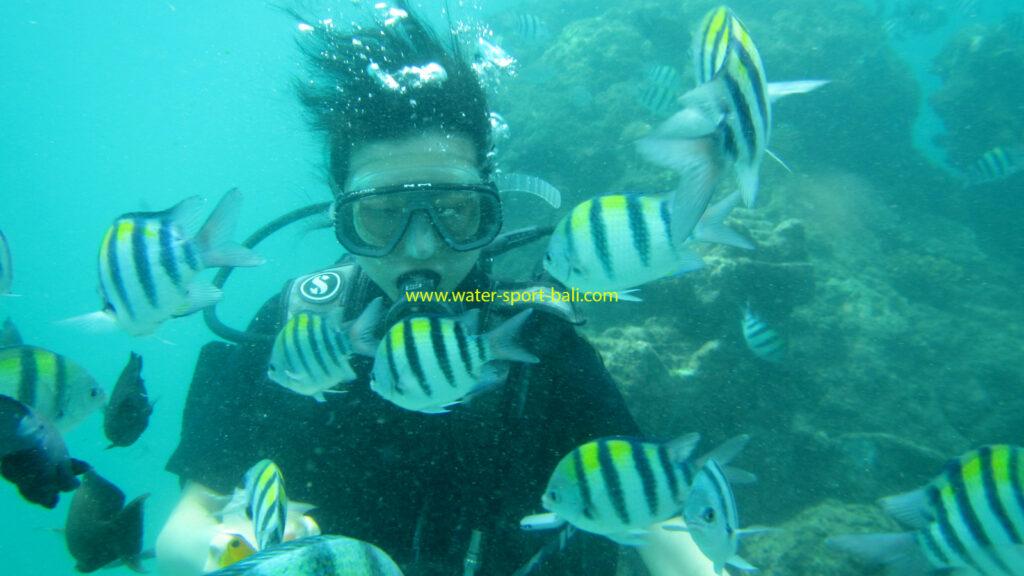 Aktivitas Scuba Diving Untuk Pemula Di Tanjung Benoa Bali