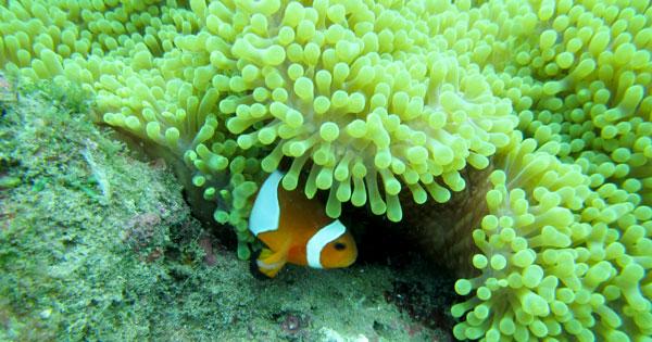 Lokasi Menyelam Di Bali Untuk Pemula