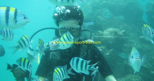 5 Tips Menyelam Di Bali Lokasi Tanjung Benoa