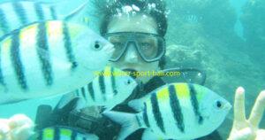 Tips Menyelam Di Bali Untuk Pemula