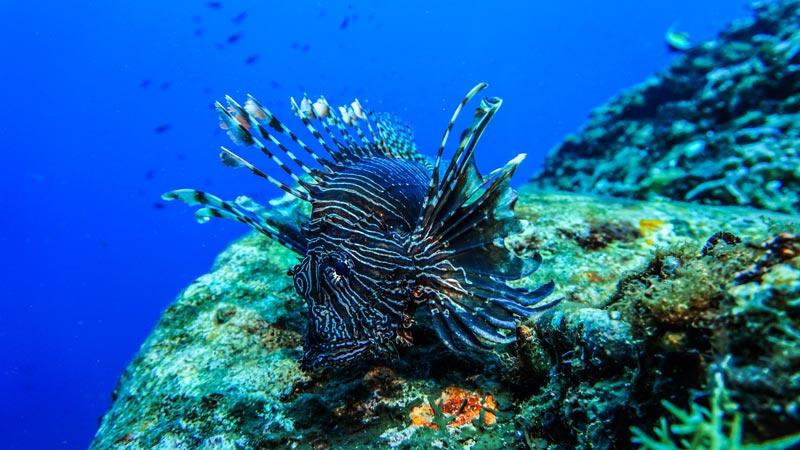 Keindahan Alam Bawah Laut Gili Trawangan