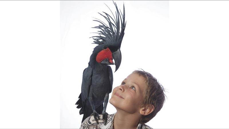 Meet the Bird Stars - Bali Bird Park
