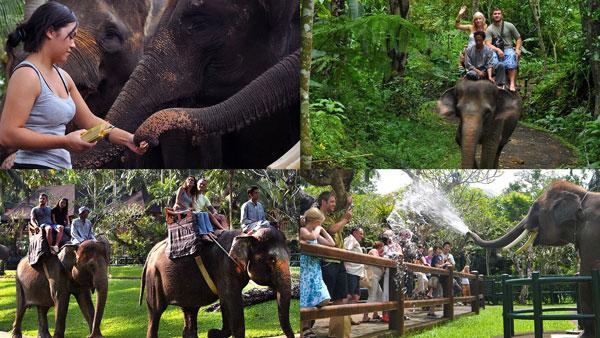 Wisata Naik Gajah Di Taro Ubud Bali